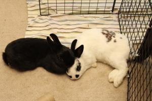 Snuggle Buns floor 3